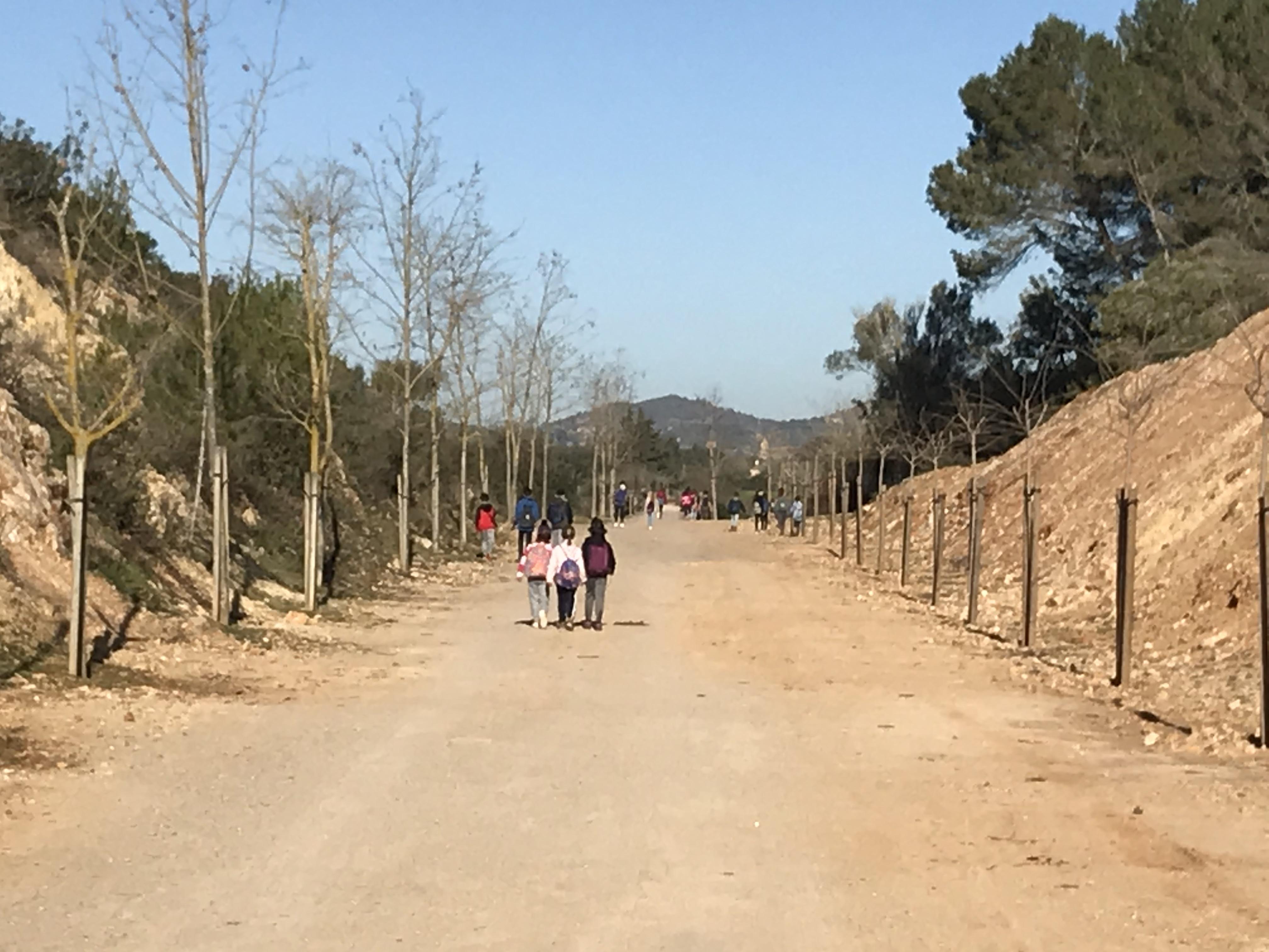Reforestació del torrent de Son Carrió